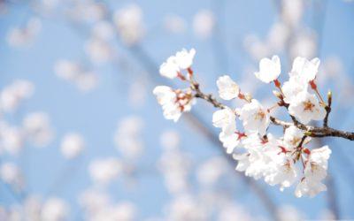 Przesilenie wiosenne – jak z nim sobie poradzić?